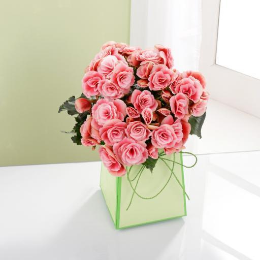 Begonia Gift Bag